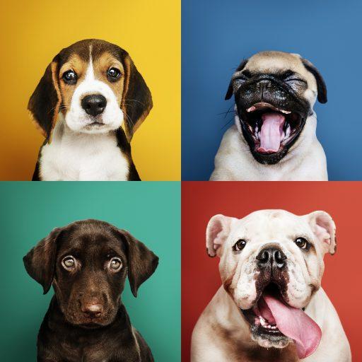 cuatro caras de perro diferentes