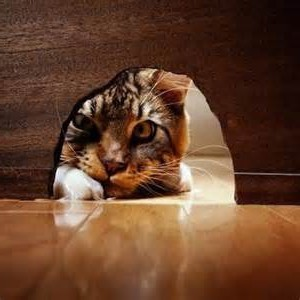 un gato mirando agujero